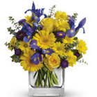 Blue and Gold from Maplehurst Florist, local flower shop in Essex Junction