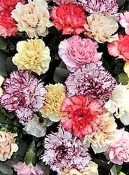 Carnations in Vase from Maplehurst Florist, local flower shop in Essex Junction