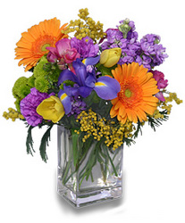 Celebrate the Day from Maplehurst Florist, local flower shop in Essex Junction