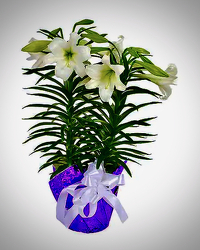 Large Easter Lily from Maplehurst Florist, local flower shop in Essex Junction