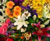 Deal of the Day from Maplehurst Florist, local flower shop in Essex Junction
