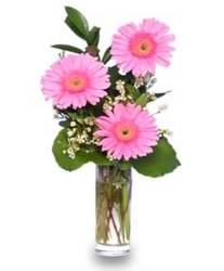 Three Beautiful Gerberas from Maplehurst Florist, local flower shop in Essex Junction