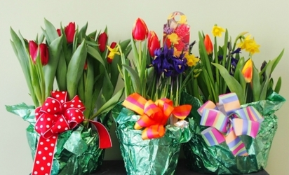 Bulb Gardens from Maplehurst Florist, local flower shop in Essex Junction