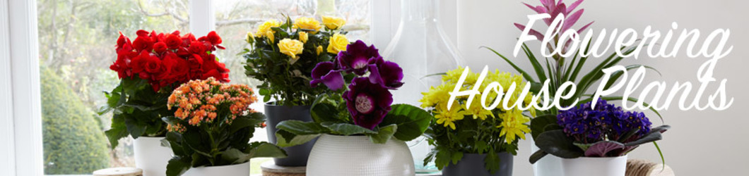 Seasonal Plants from Maplehurst Florist, local flower shop in Essex Junction