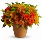 Season of Splendor from Maplehurst Florist, local flower shop in Essex Junction