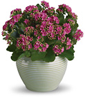 Bountiful Kalanchoe from Maplehurst Florist, local flower shop in Essex Junction