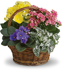 Spring Has Sprung Mixed Basket from Maplehurst Florist, local flower shop in Essex Junction