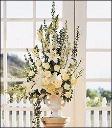 williston bride more limited