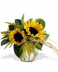 Sunny Sunflowers from Maplehurst Florist, local flower shop in Essex Junction