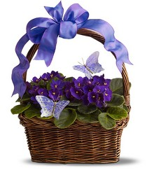 Violets and Butterflies from Maplehurst Florist, local flower shop in Essex Junction