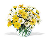 Dashing Daisies from Maplehurst Florist, local flower shop in Essex Junction